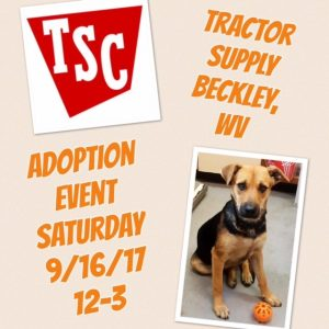 Tractor Supply Adoption Event